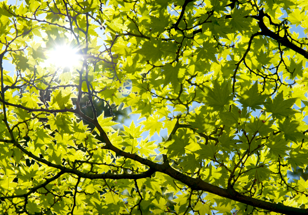 Lichtverhältnisse vom Bäumen prüfen, Gartenpflege München