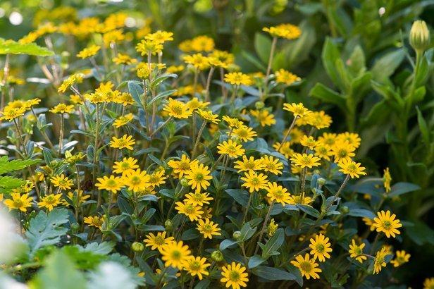 Gartenbau mit bunten Blumenwiesen in München