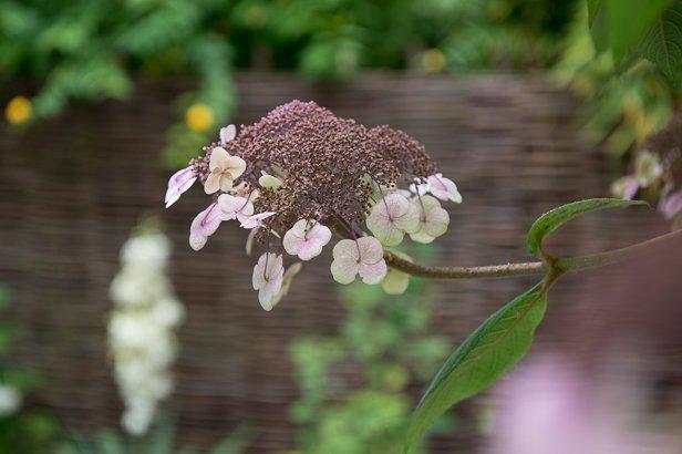 Moderne Gartengestaltung durch gezielte Pflanzung