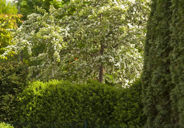Gartenbau Beispiel Hecken schneiden in München