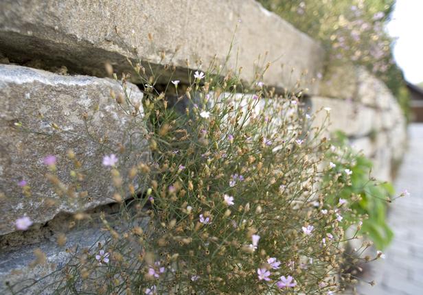 Natursteinmauer mit Bepflanzung