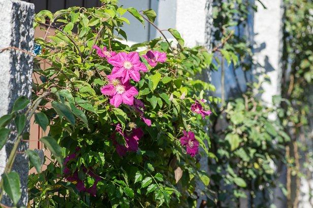 Sonnige Pflanzen voller Lebensfreude in München