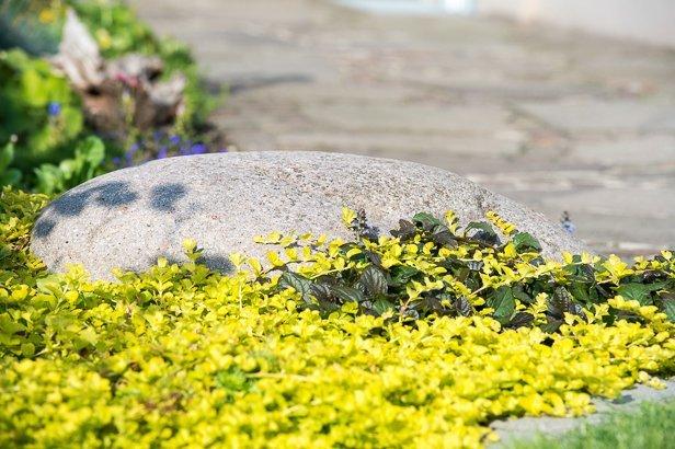 Findling im Münchner Blumenbeet