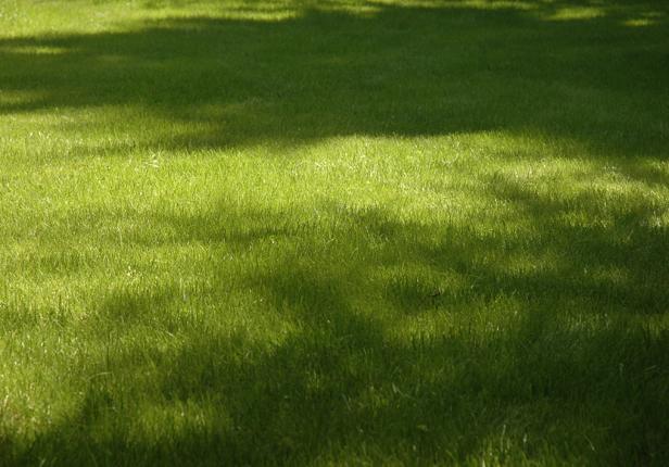 Vertikutierter und Aerifizierter Rasen