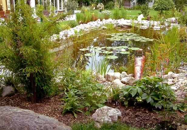 Gartenteich mit Seerosen München