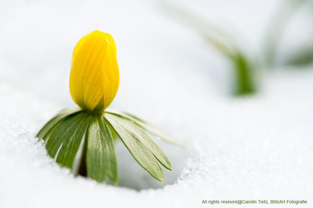 Frühlingsboten-2519-Bearbeitet_klein