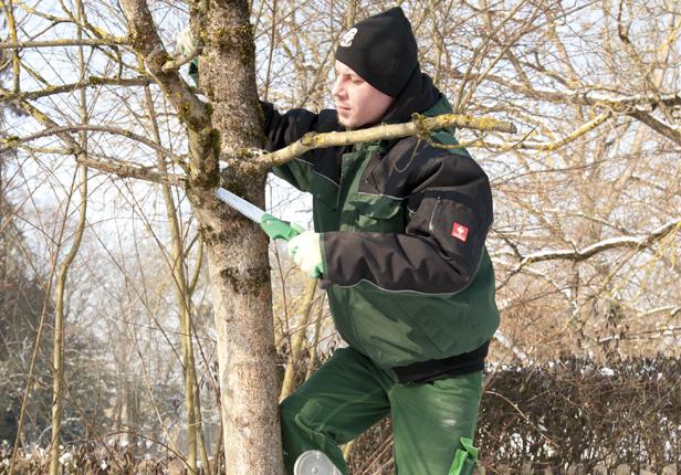 Gartenbau Baumschnitt