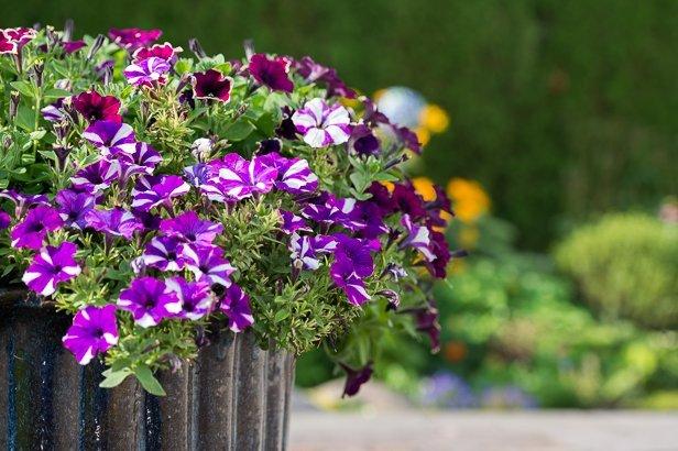 Gartengestaltung durch Blumenbeet am Wegesrand