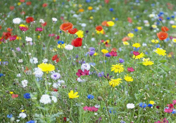 Blumenwiese als pflegeleichte Alternative zum Rasen in München