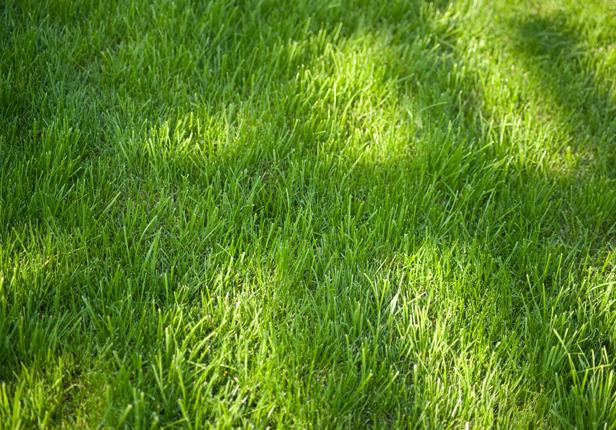 Satter grüner Rasen erfordert professionelle Pflege