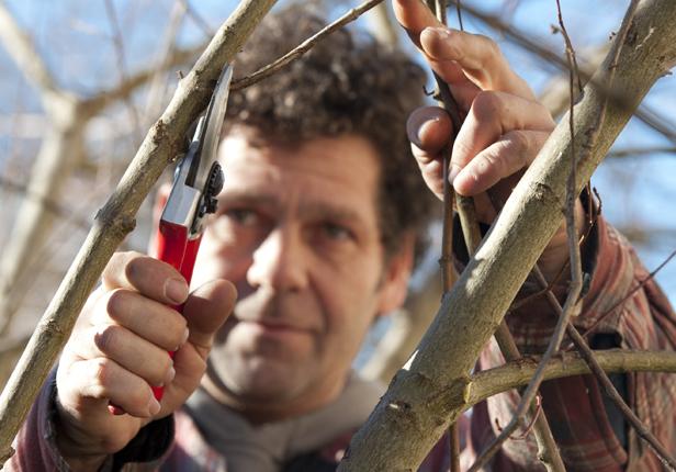 Baumschnitt vom Landschaftsgärtner in München
