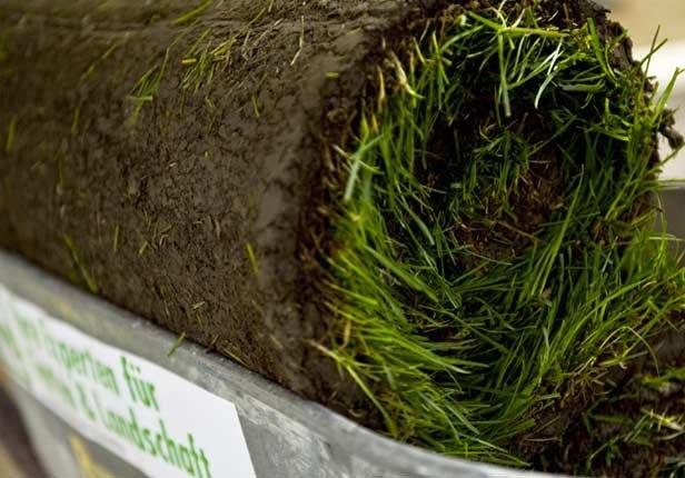 Roll Rasen ausrollen vom Gartengestalter in München