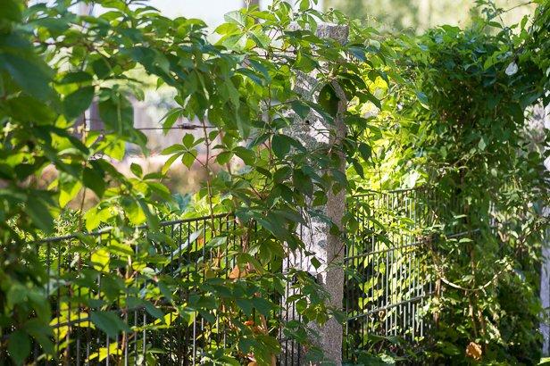 Gartenbau Rankelzaun München