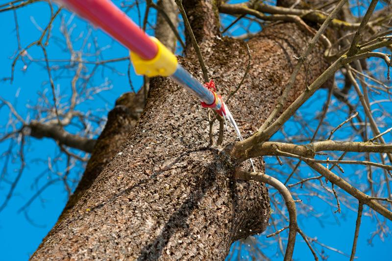 Ast wird von Baum abgesaegt